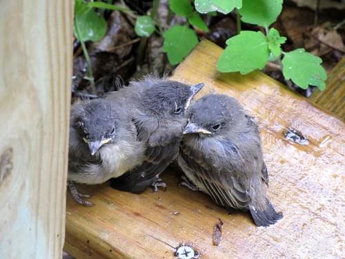 Birdies-6