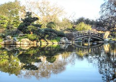 Morning reflections in Hakone Gardens