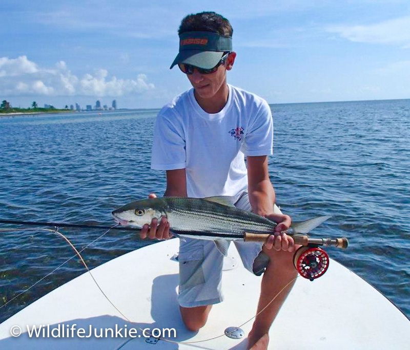 Keys Bonefish on Fly