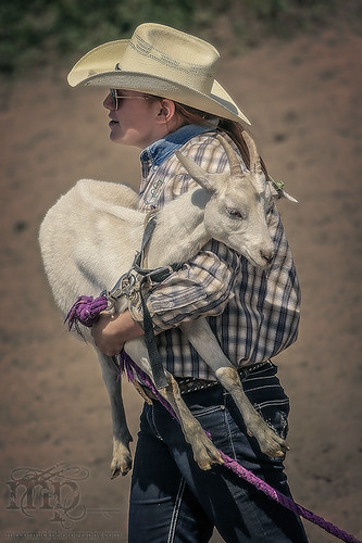 Gooseberry Lake : 4-H Rodeo 2013 : Goats, Delivered Fresh