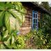 Private gardens/gaerten- Garten W in W
