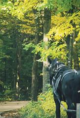 Horses of Mackinac Island