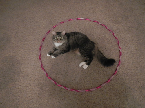 Sacred Circle Kitty