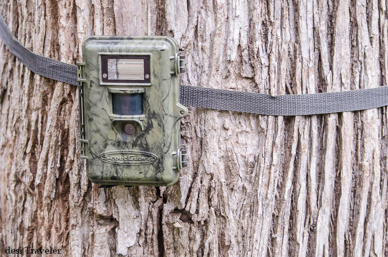 Tiger Census Camera Trap