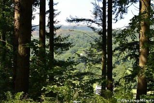 View through the forest