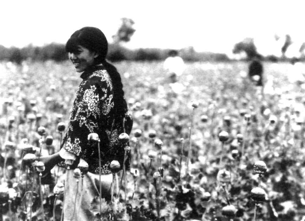 opium poppy harvest north Manchuria