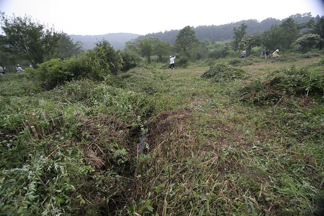 刈り開かれた薮の中から,牧場造成時代の水路が現れた.