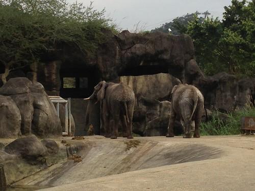 10非洲動物區_大象