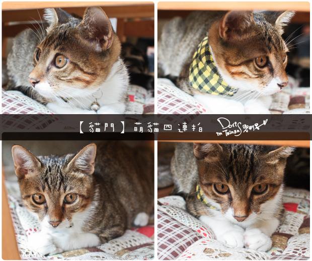 貓門-16
