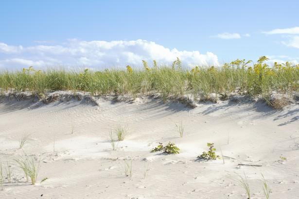 dune expanse final