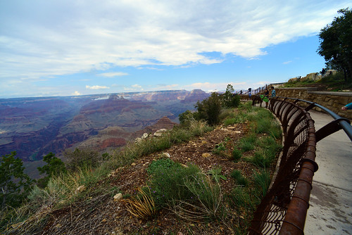 Grasses grown from the NRCS Plant Materials Center in Los Lunas line the edge of Mather Point in the South Rim of the Grand Canyon.