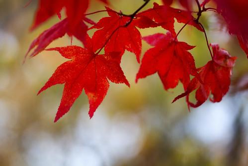 11-13 fall-9512-Edit-22