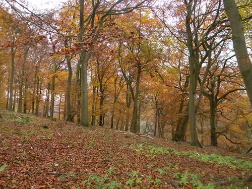 Autumn colour 2