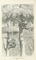 """British Library digitised image from page 518 of """"Explorations and adventures in Equatorial Africa; with accounts of the manners and customs of the people and of the chace of the gorilla, crocodile, leopard, elephant, hippopotamus and other animals. (Seco"""