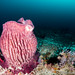 Deep water sponges