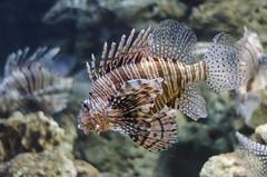 Georgia Aquarium -104
