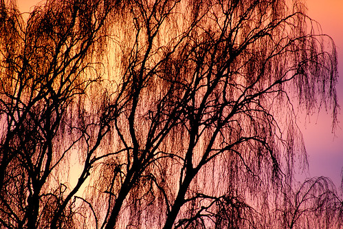 sunset tree norway sunrise dawn stavanger twilight february rogaland