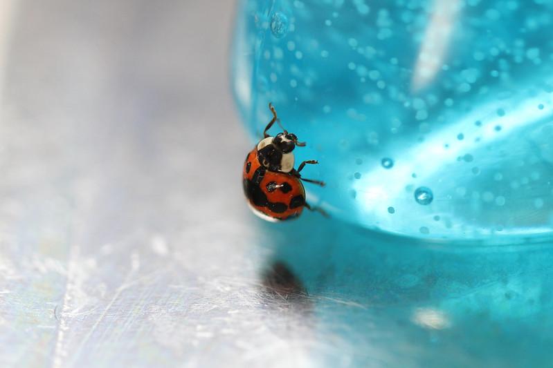 ladybug on handsoap