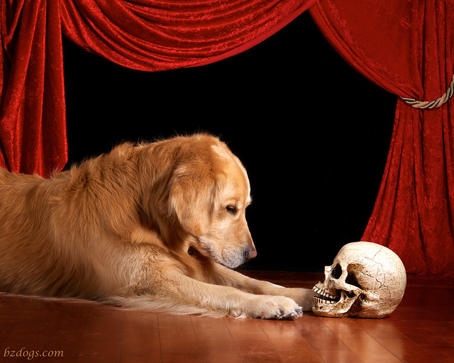 Alas, poor Yorick! I knew him