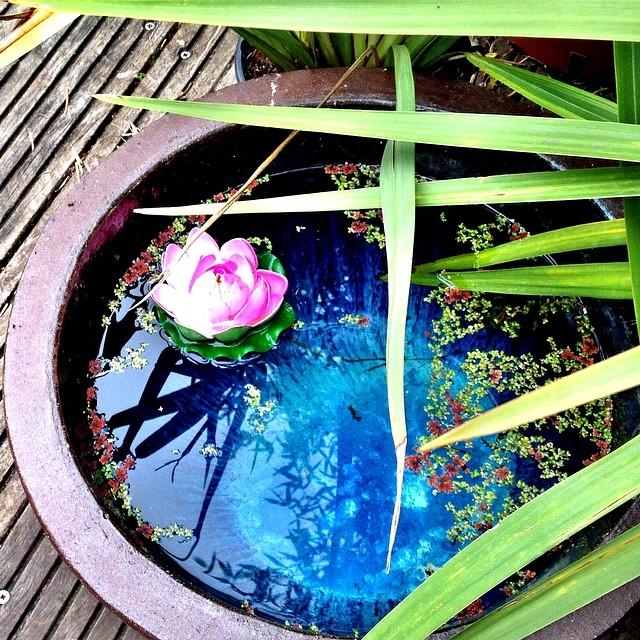 Fleur aquatique HDR