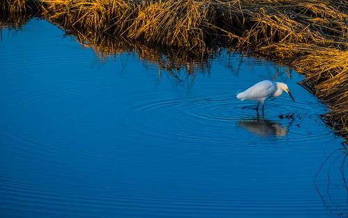 silversandswalnutbeachsunriseegretrocksbarnacles wetland wetlands marsh marshland connecticut ct newengland silversandspark park beach milfordct milfordbeach landscape