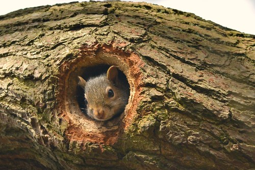 Squirel done home improvements to a Woodpeckers holes