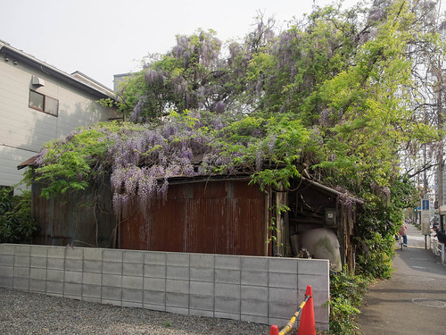 House of wisteria