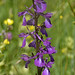 Orchis laxiflora ssp elegans (Lax-flowered Orchid) Andrew Cleave