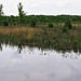 Small photo of Hiles Wetlands State Natural Area