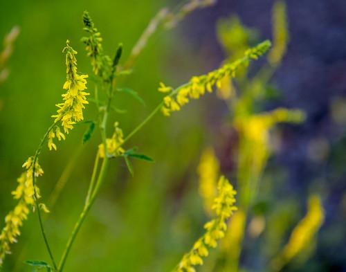 Weeds #77