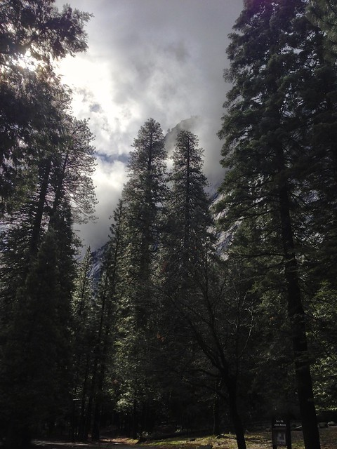 Trees and Clouds in Yosemite