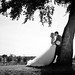 Wedding Tree Romance by Mark McCue