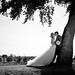 Wedding Tree Romance by Mark McCue