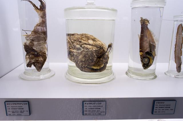 国立科学博物館 深海展