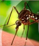 Closeup Photo of Mosquito