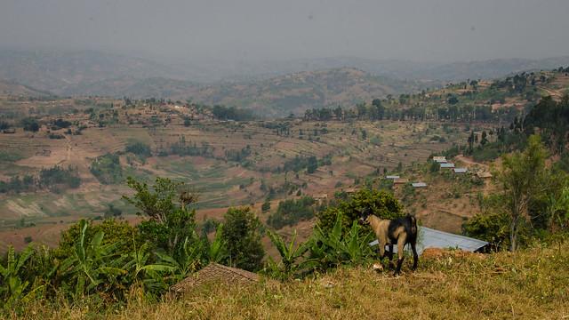 Rwandan Hills