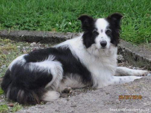 Mon, Aug 26th, 2013 Lost Female Dog - Clara Road, Horseleap, Offaly