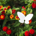 white butterflies in athens