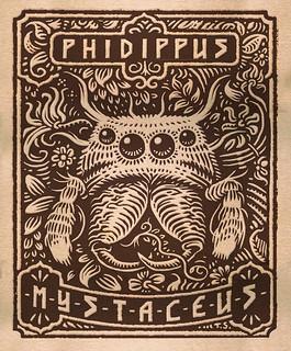Phidippus mystaceus design - Digital