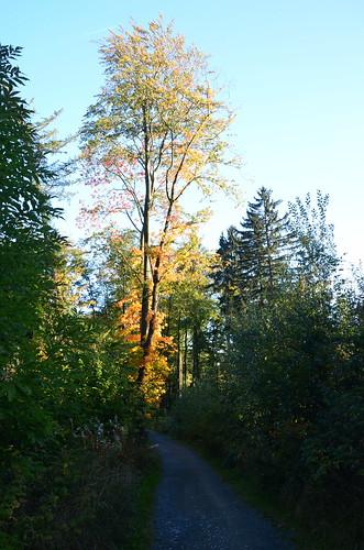 Baum am Wegrand