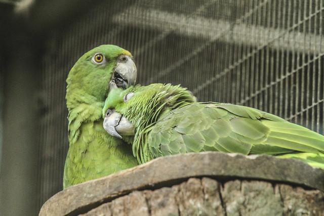 Jurong Bird Park-34