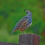 Birds, California, 2013