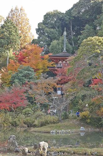 【写真】2013 紅葉 : 浄瑠璃寺/2019-08-22/IMGP3542