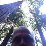 Image: Redwood Selfie