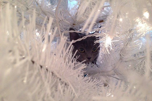 Yep, she climbed the tree.