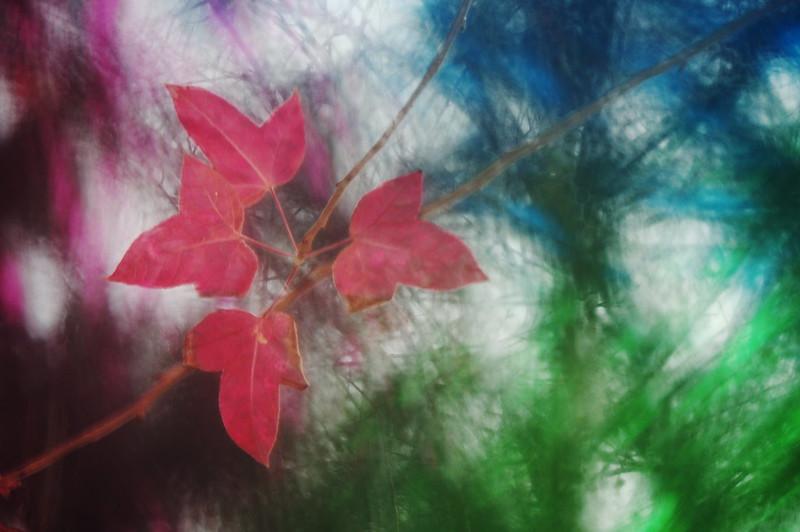 七彩繽紛的紅葉
