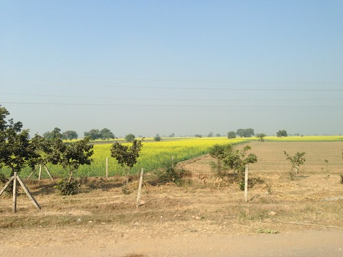 india rural countryside highway farm rapeseed 印度 uploaded:by=flickrmobile flickriosapp:filter=nofilter