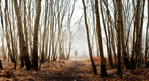 wood trees winter mist cold nature fog canon landscape walk freeze 7d