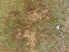 Grass_green-orangemoss-sticks-clover-dirtpatches-leaves_wide.jpg