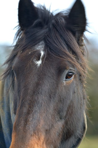 20140222-30a_Horse (Near Flecknoe)